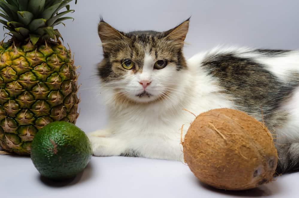 Can Cats Eat Avocado
