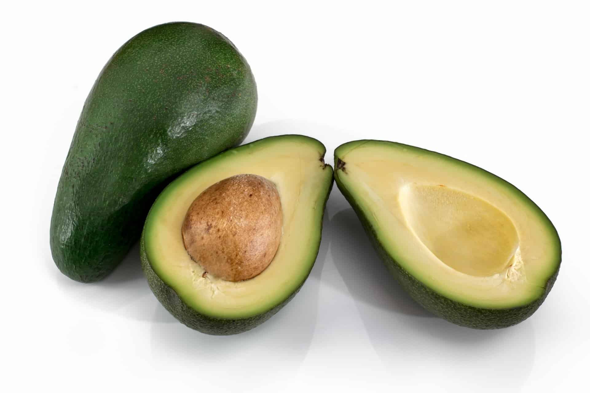 Can Cats Eat Avocado 3 Benefits Precautions Revealed