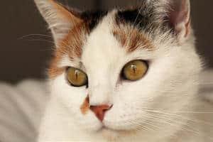 image of a beautiful feline
