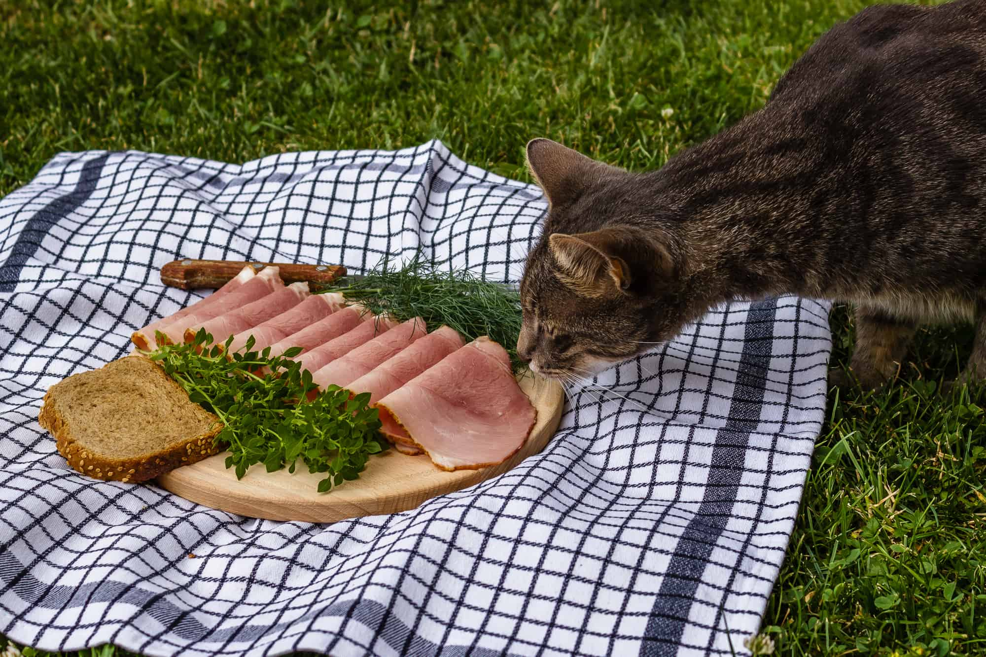 Can Cats Eat Ham