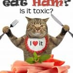 Can Cats Eat Ham? Is It Toxic Or Safe?