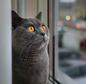 a frightened black cat looks out the window