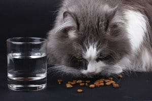 How Much Water Does a Cat Need? How to Get Her To Drink More? 3