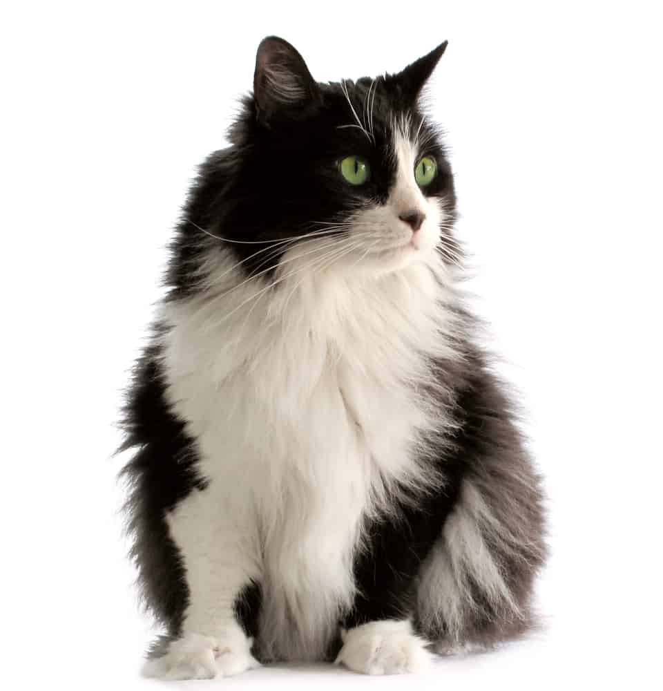 Black And White Cat Names Best 222 Cat Names