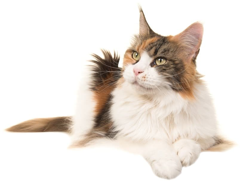 200 Plus German Cat Names: The Conventional and The Quirky 5