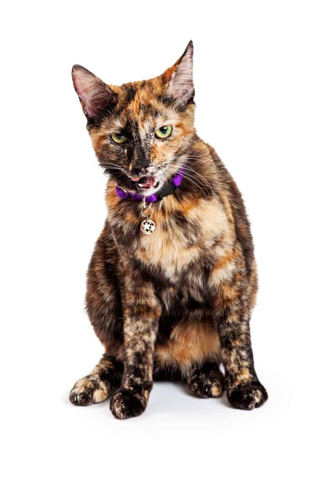 278 Tortoiseshell Cat Names For Unique Feline Beauties 2