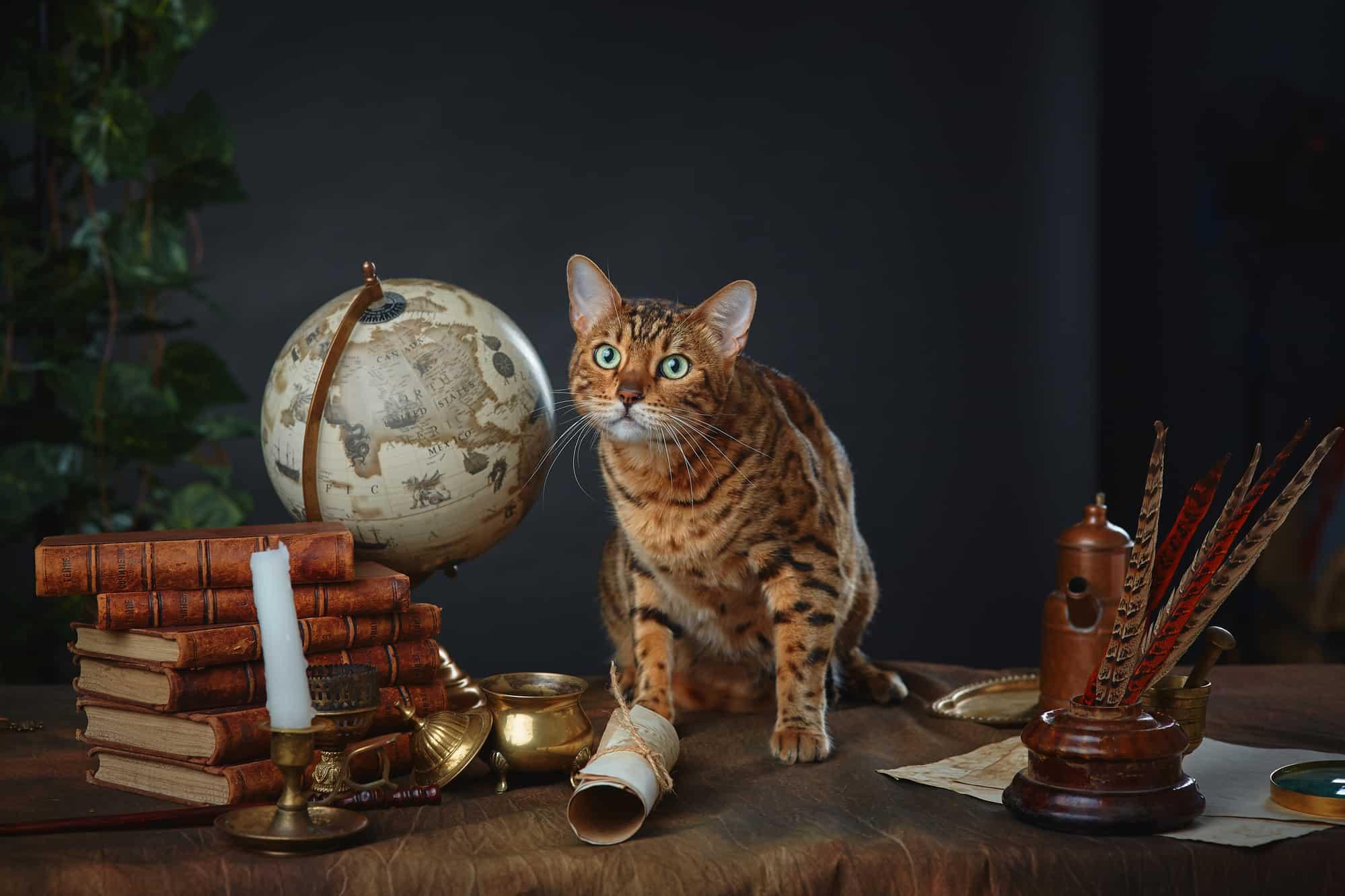 harry potter cat names