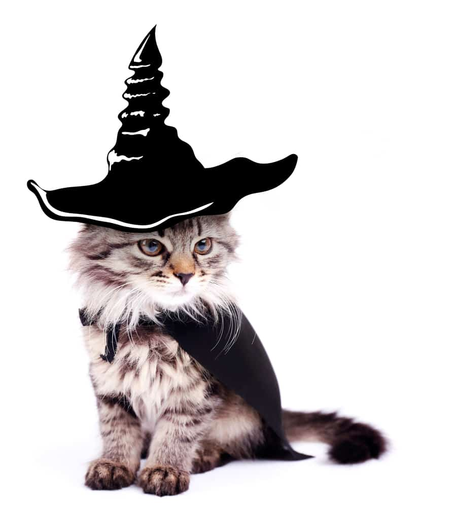 181 Harry Potter Cat Names For Your Little Magician 7