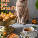 Can Cats Eat Bread? Is It Safe For The Kitty?