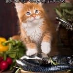 Can Cats Eat Salmon? Is It A Superfood For Felines Too?
