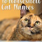278 Tortoiseshell Cat Names For Unique Feline Beauties