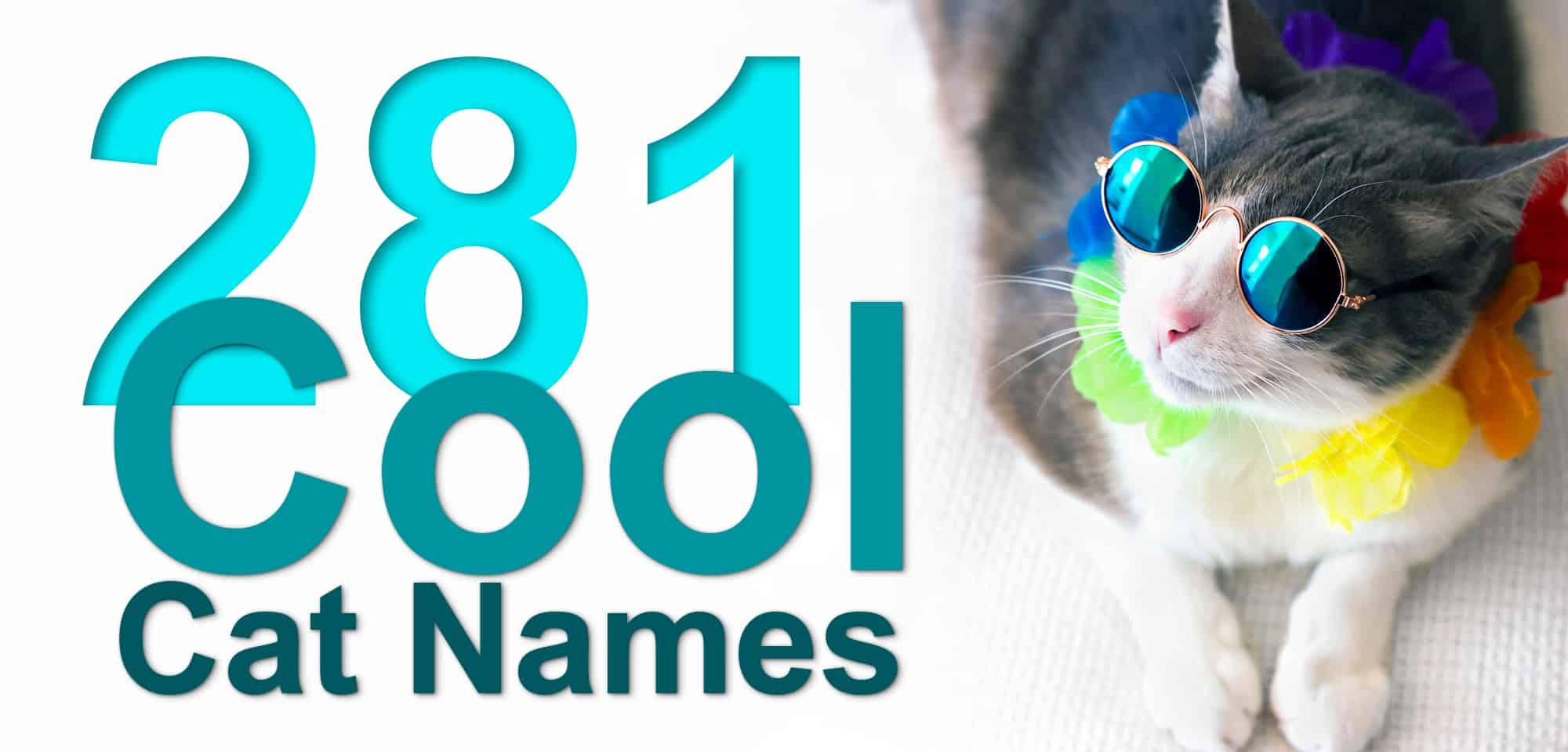 Cool Cat Names