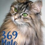 Powerful 369 Male Cat Names For Your Fearsome Feline