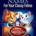 Aristocats Names For Your Classy Feline