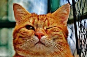 image of a feline winking