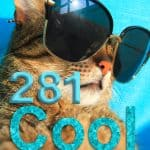 281 Cool Cat Names For Your Awesome Cat