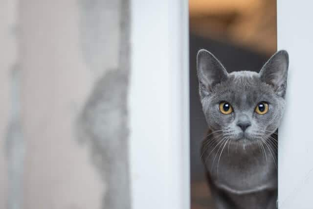 83 Amazing Gray Cat Names For Your Ash-Like Beauty 7