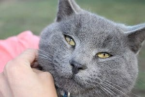 83 Amazing Gray Cat Names For Your Ash-Like Beauty 2