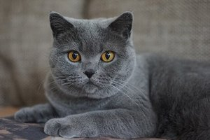 83 Amazing Gray Cat Names For Your Ash-Like Beauty 1