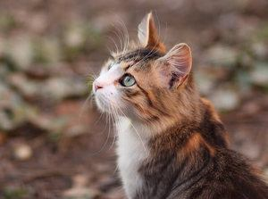 Picture of cat looking up