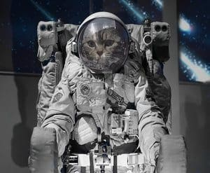 a cat in an astronaut suit