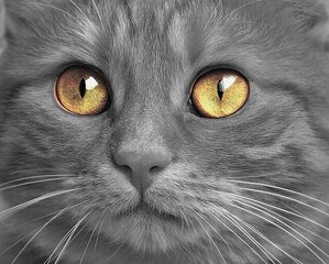 83 Amazing Gray Cat Names For Your Ash-Like Beauty 6