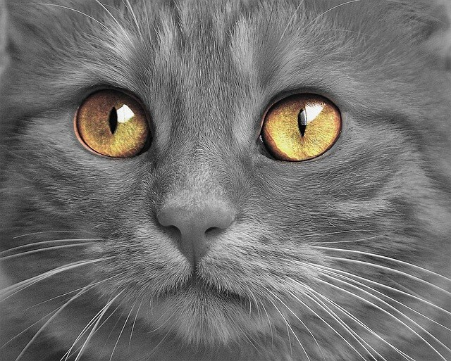 83 Amazing Gray Cat Names For Your Ash-Like Beauty 8
