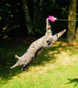 image of a cat playing outside