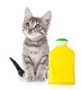 image of a kitty standing beside a cat shampoo bottle
