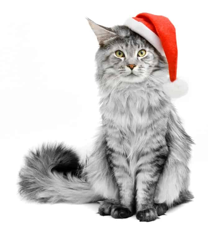 115 Christmas Cat Names For Your Bundle Of Joy 1