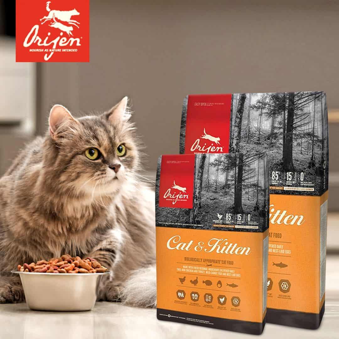 orijen cat food review