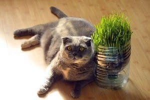 5 High Fiber Cat Foods That Are Good For Constipation [2020 Reviews] 16