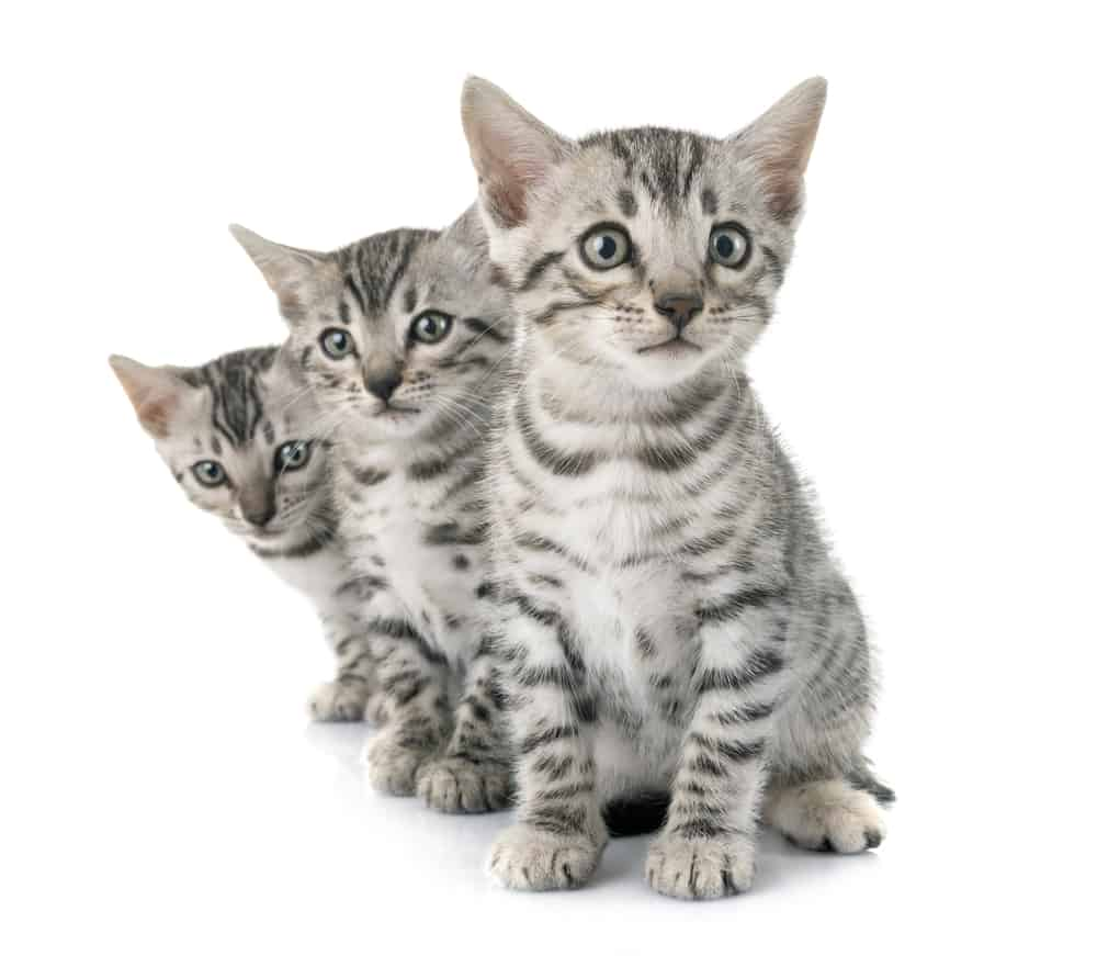 200+ Tabby Cat Names: From the Quirky to the Cute and Famous 7