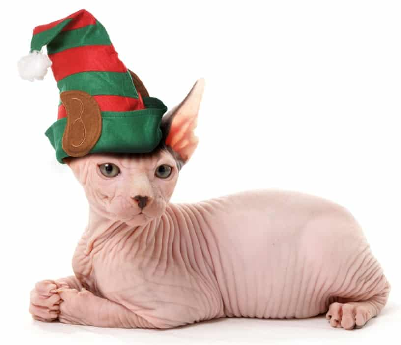 115 Christmas Cat Names For Your Bundle Of Joy 3
