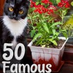 50 Famous Cat Names For Your Legendary Feline