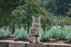 image of a tabby feline in a garden