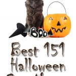 The Best 151 Halloween Cat Names For Your Mysterious Kitty