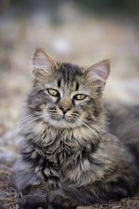 50 Famous Cat Names For Your Legendary Feline 5