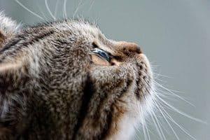 50 Famous Cat Names For Your Legendary Feline 4
