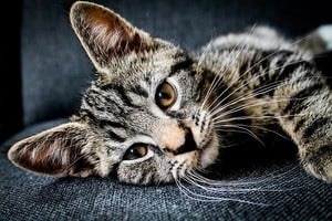 50 Famous Cat Names For Your Legendary Feline 2