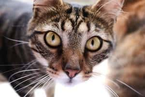 50 Famous Cat Names For Your Legendary Feline 1