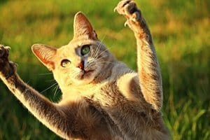 50 Famous Cat Names For Your Legendary Feline 3