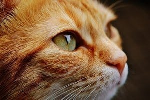 image of a cat's face