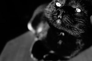 The Best 151 Halloween Cat Names For Your Mysterious Kitty 2