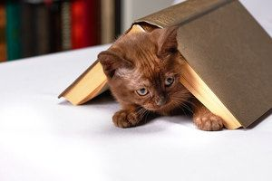 kitten covered with the book