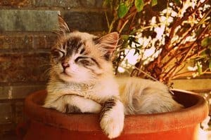 image of a kitty in a pot