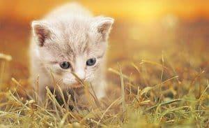 white kitten in the grass