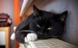 a black cat with white paws and green eyes lies on the radiator