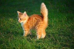 orange kitten in the grass