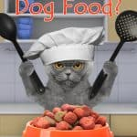 Can Cats Eat Dog Food? Learn Which Nutrients It Lacks